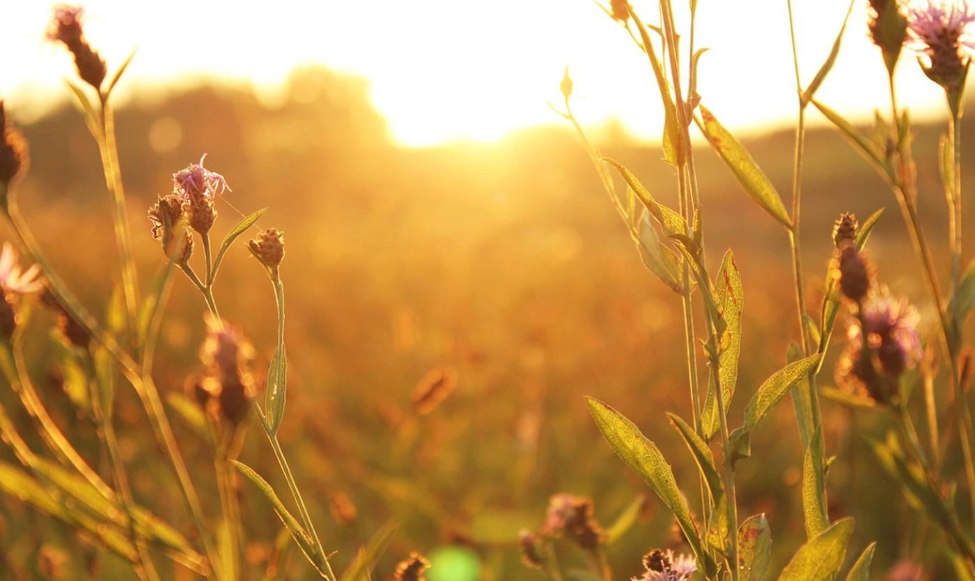 Sonnenaufgang in der Natur