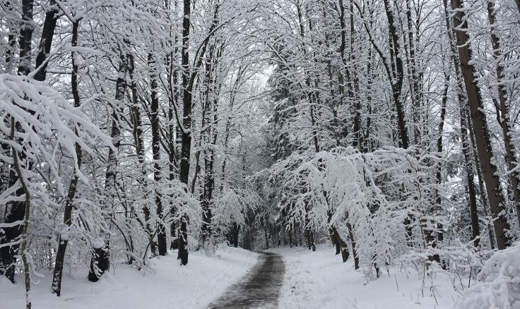 achtsamkeit-achtsamkeitsblog-winter-schnee-spaziergang