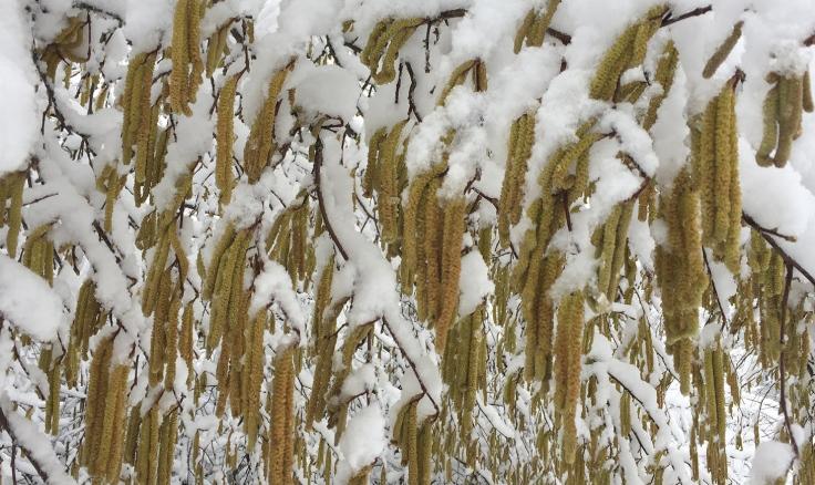 achtsamkeit-achtsamkeitsuebungen-achtsamkeitsblog-winter-schnee-weidekaetzchen